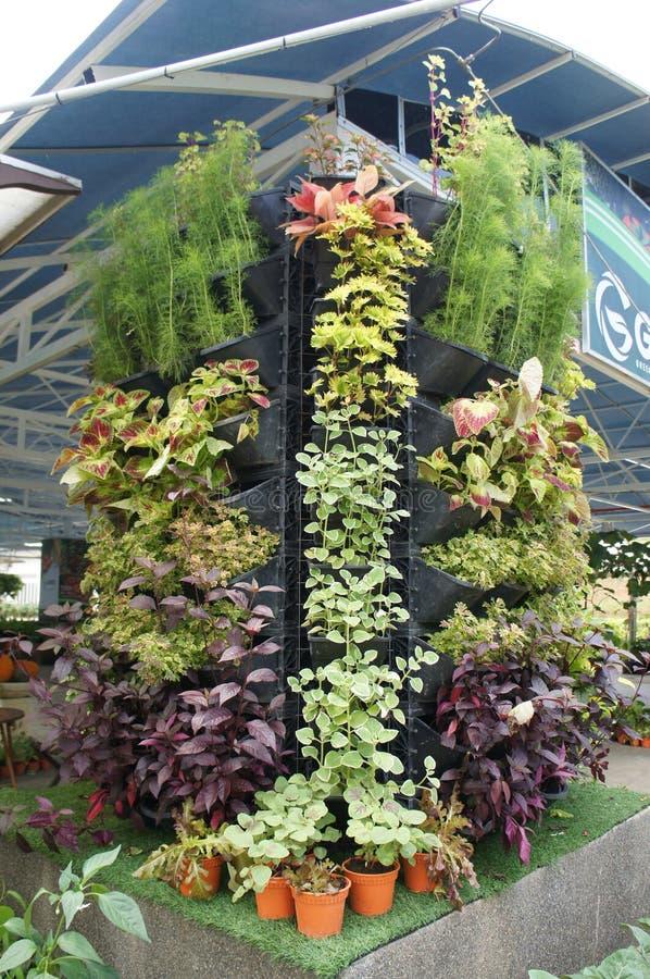 种植花、草本和菜作为垂直的庭院 图库摄影