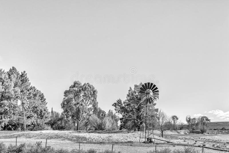 种田在路R356的风景在Loxton和Fraserburg之间 单色 免版税库存图片