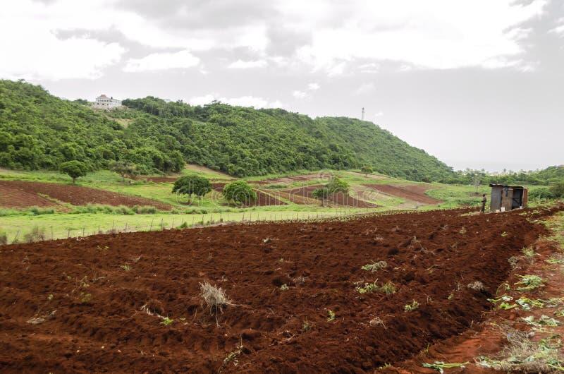 种田过程中 库存照片