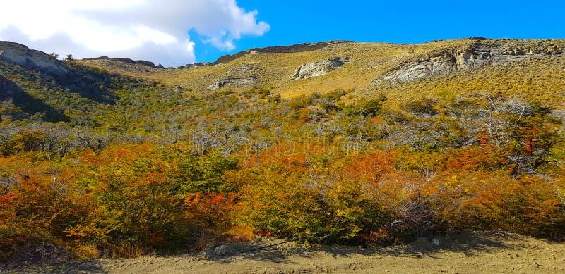 秋叶的颜色,巴塔哥尼亚,智利 免版税库存照片