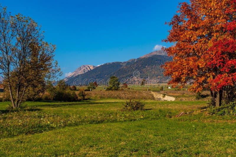 秋天视图在Burgusio,特伦托自治省女低音阿迪杰,意大利 库存照片