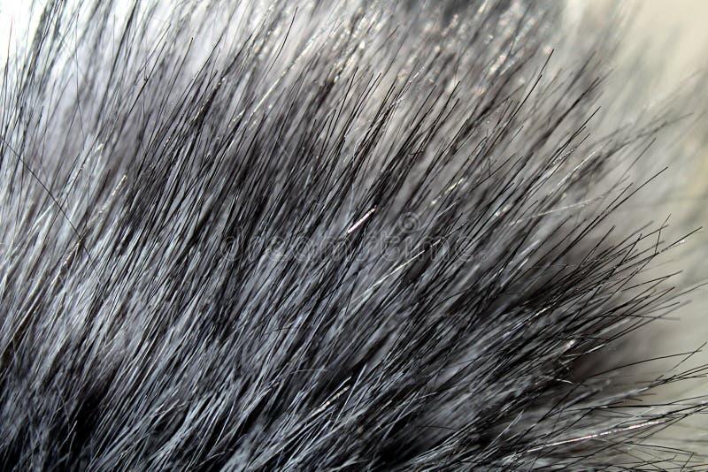 纹理毛皮灰色与长的休息 免版税库存照片