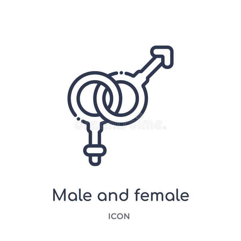 线性男性和女性性别象从人体零件概述汇集 稀薄的线被隔绝的男性和女性性别象  库存例证
