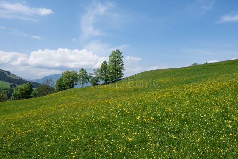 绿草领域和清楚的天空蔚蓝在山 免版税库存照片