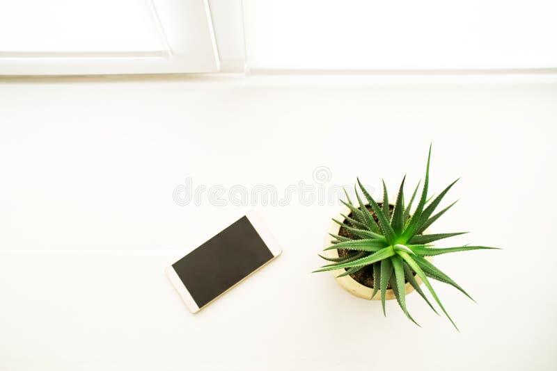 绿色仙人掌和手机在窗台在办公室 免版税图库摄影