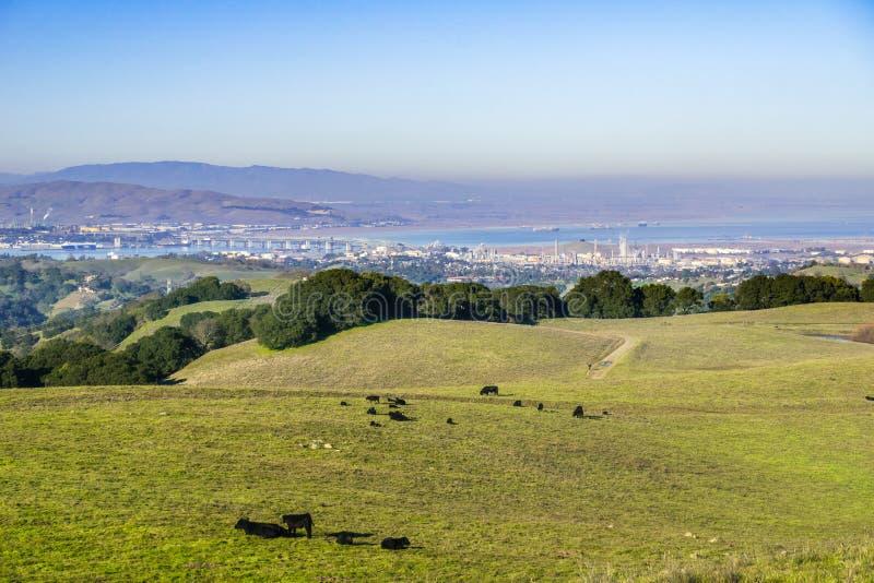 绿色在Suisun海湾在背景中,康特拉科斯塔县,旧金山的绵延山在布里奥内斯地方公园和污染 免版税库存照片