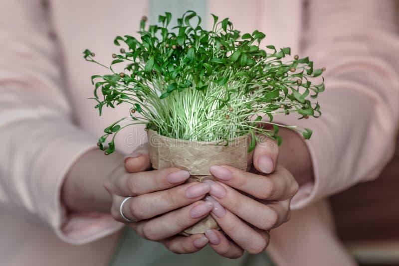 绿色植物新的喷口eco 库存图片