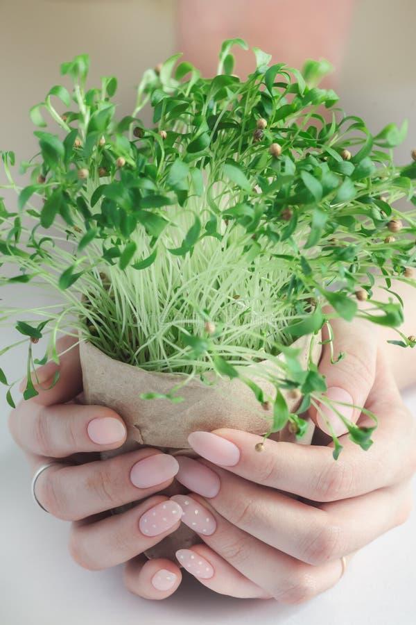 绿色植物新的喷口eco 库存照片