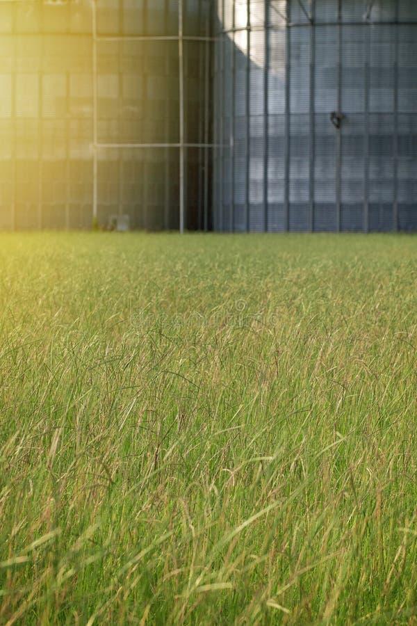 绿色领域有很多草和金属大厦在背景中 免版税图库摄影