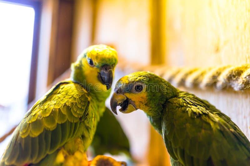 绿色鹦鹉坐一条绳索在一个鸟类学公园 免版税图库摄影