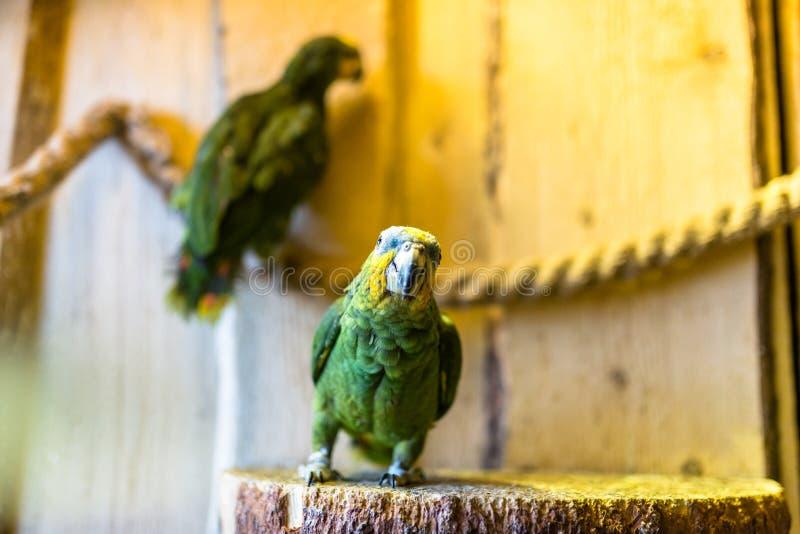 绿色鹦鹉坐一条绳索在一个鸟类学公园 库存图片