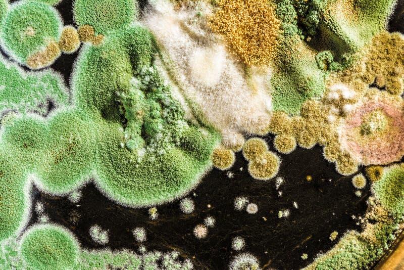 绿霉和真菌纹理在黑背景,微生物学宏指令摘要背景 库存照片