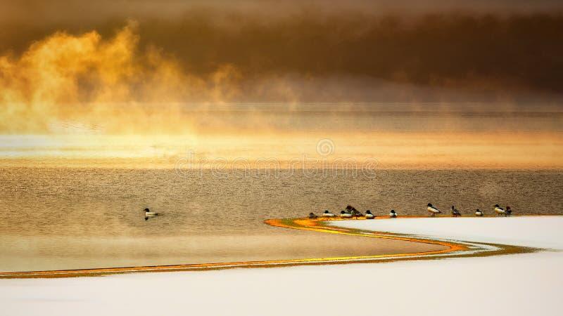 结冰的和有雾的湖,冬天 免版税库存照片