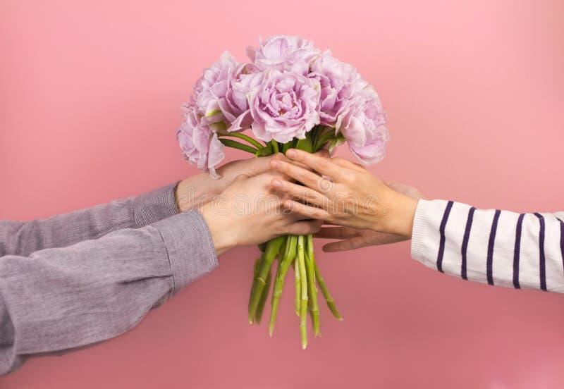 给紫罗兰色双重郁金香的花束他的年轻女朋友佩带的镶边套头衫的人胳膊 女性手采取花 免版税库存照片