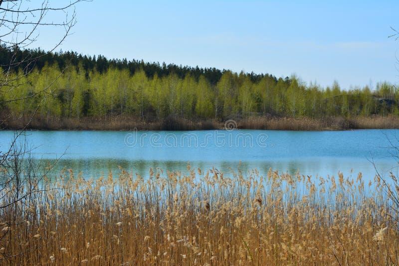 美丽如画的横向 有纸莎草和森林丛林的湖在岸的天际的 春天风景 库存照片