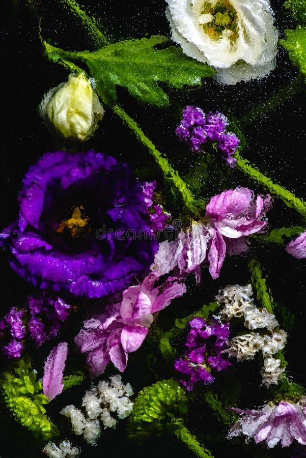 美丽的各种各样的湿花特写镜头视图  图库摄影