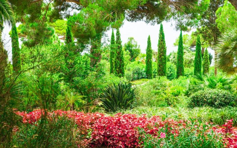 美丽的庭院花和异乎寻常的植物贴墙纸 图库摄影