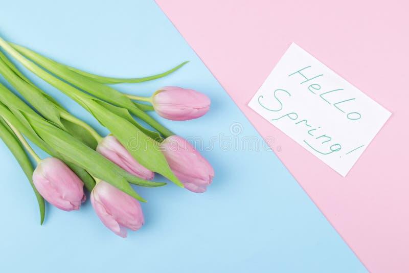 美丽的桃红色郁金香花花束在时髦桃红色和蓝色多彩多姿的背景的 春天 节假日 发短信给你好春天, 免版税库存图片