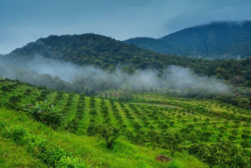 美丽的绿色山谷,在多巴湖,棉兰,印度尼西亚的山景 图库摄影