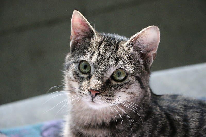 美丽的猫查寻 库存照片