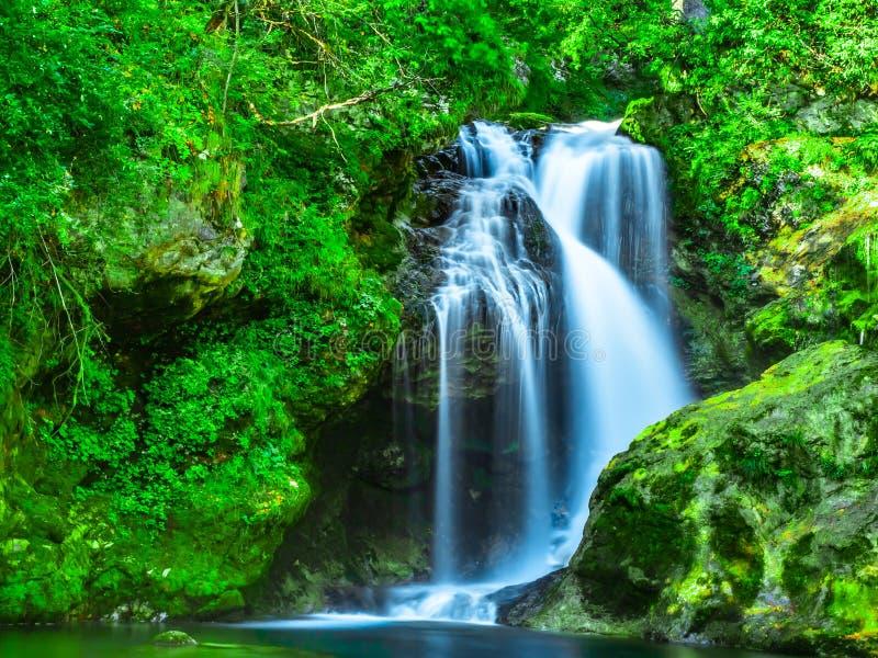 美丽的瀑布在Vintgar峡谷的绿色自然森林停放 库存照片