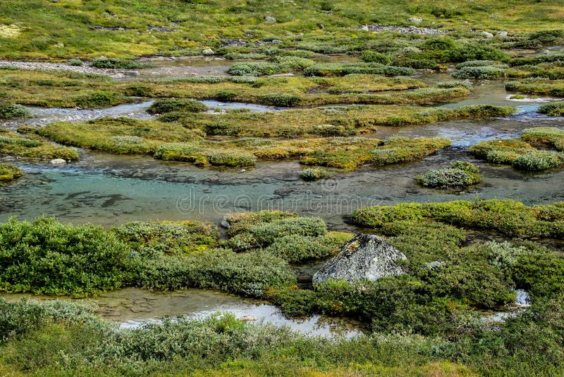 美好的冷的北自然:鲜绿色的青苔和小河 免版税库存照片