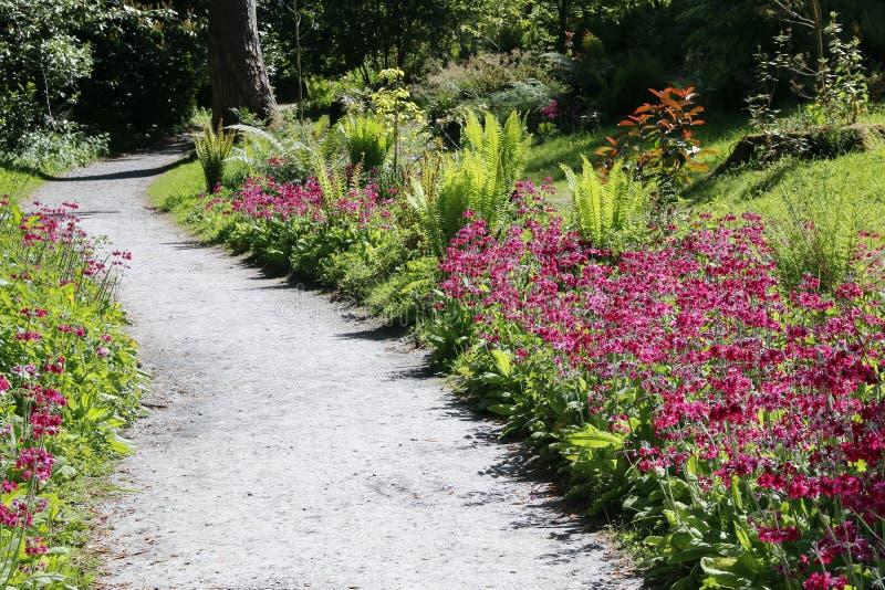 石渣带领通过蕨和桃红色花的庭院道路 库存照片