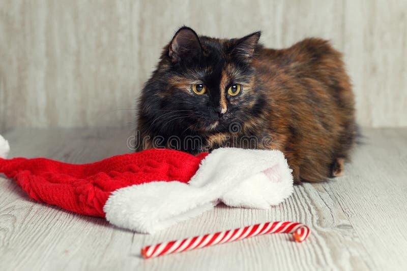 猫在圣诞节帽子和糖果附近说谎,看和不耐烦 免版税图库摄影