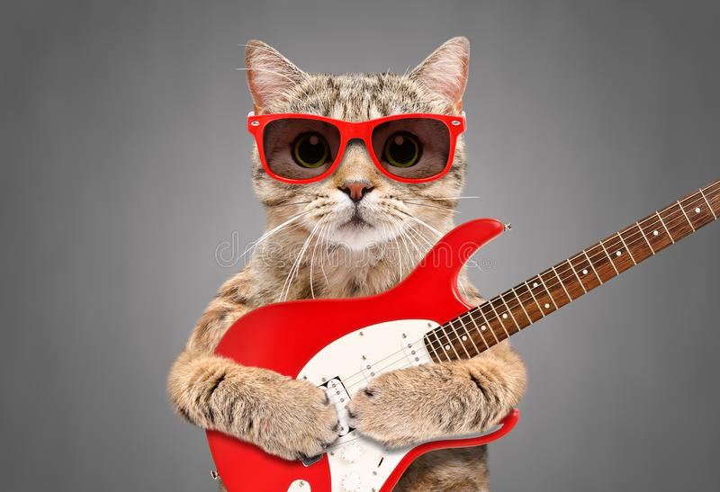 猫苏格兰平直在有电吉他的太阳镜 免版税库存图片