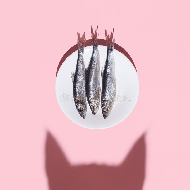 猫鱼与 好奇猫阴影和板材有银鱼的在桃红色背景 困难光 顶视图 平的位置 免版税图库摄影