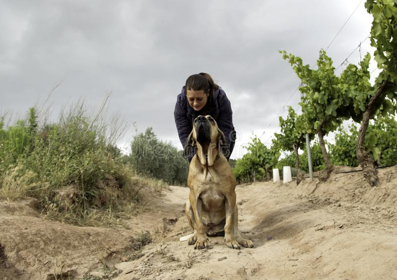 猎犬公园 免版税库存照片