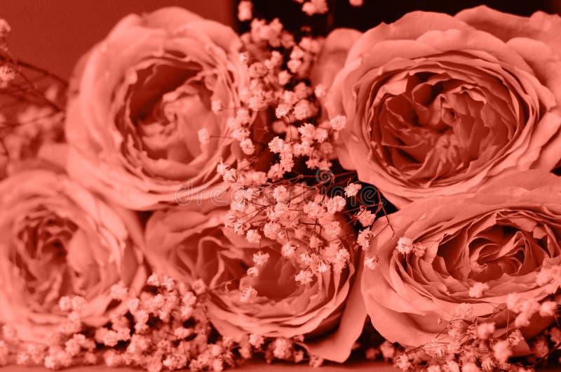 玫瑰花束与珊瑚色麦的 库存图片