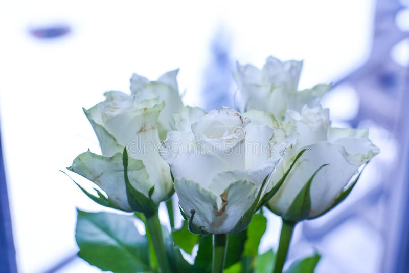 玫瑰花束在一个花瓶的由窗口 库存照片