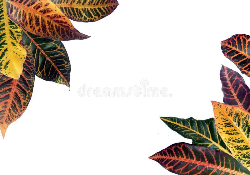 热带五颜六色的样式的叶子 图库摄影