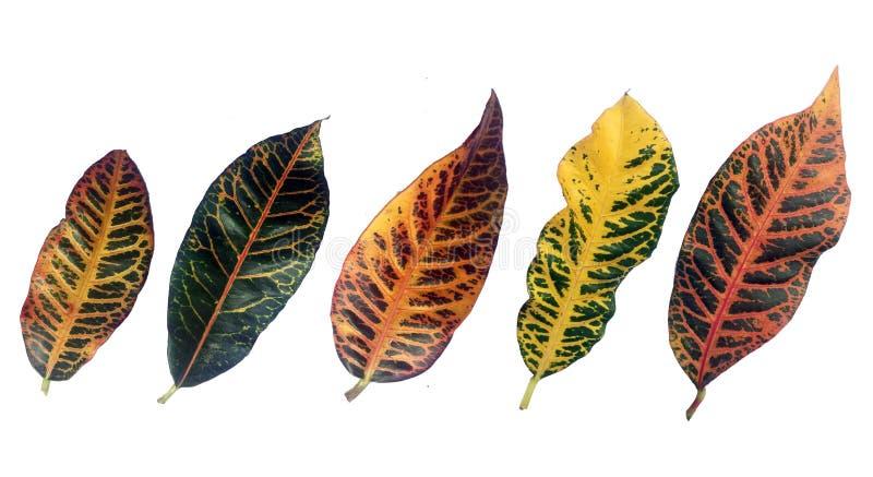热带五颜六色的样式的叶子 免版税库存照片