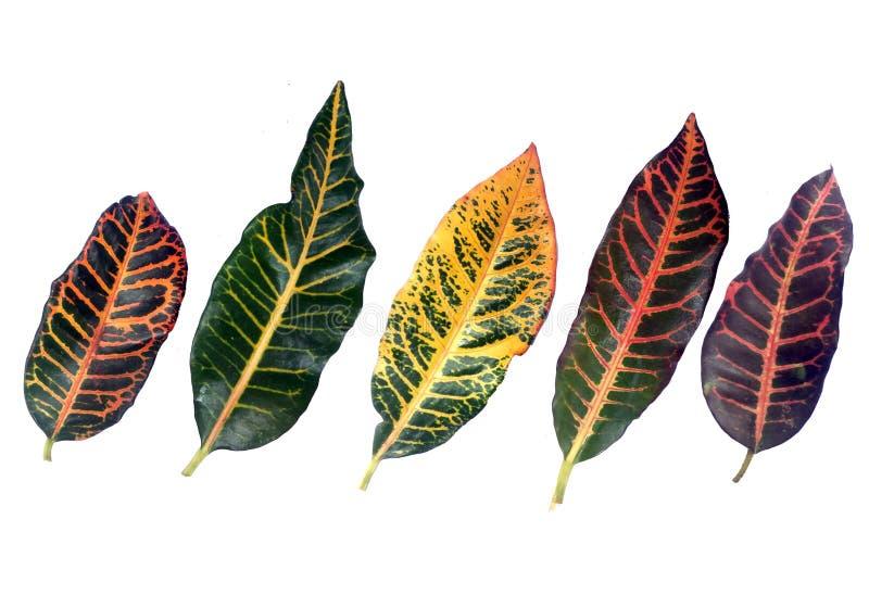热带五颜六色的样式的叶子 库存照片