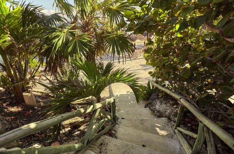 热带植被围拢的楼梯 免版税库存照片