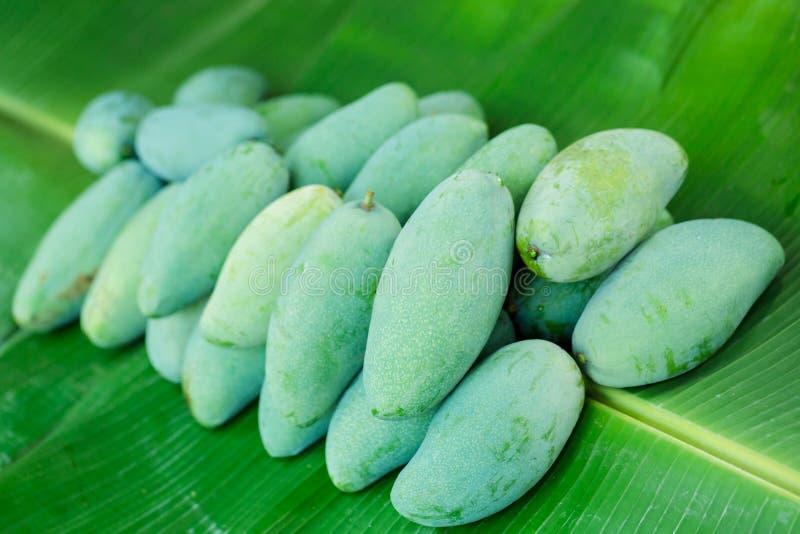 热带泰国绿色芒果是在香蕉叶子的普遍的果子,芒果有与酸鲜美和高维生素C的一个独特的味道 库存照片