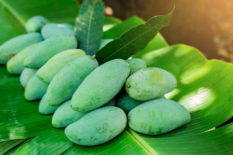 热带泰国绿色芒果是在香蕉叶子的普遍的果子,芒果有与酸鲜美和高维生素C的一个独特的味道 免版税库存照片
