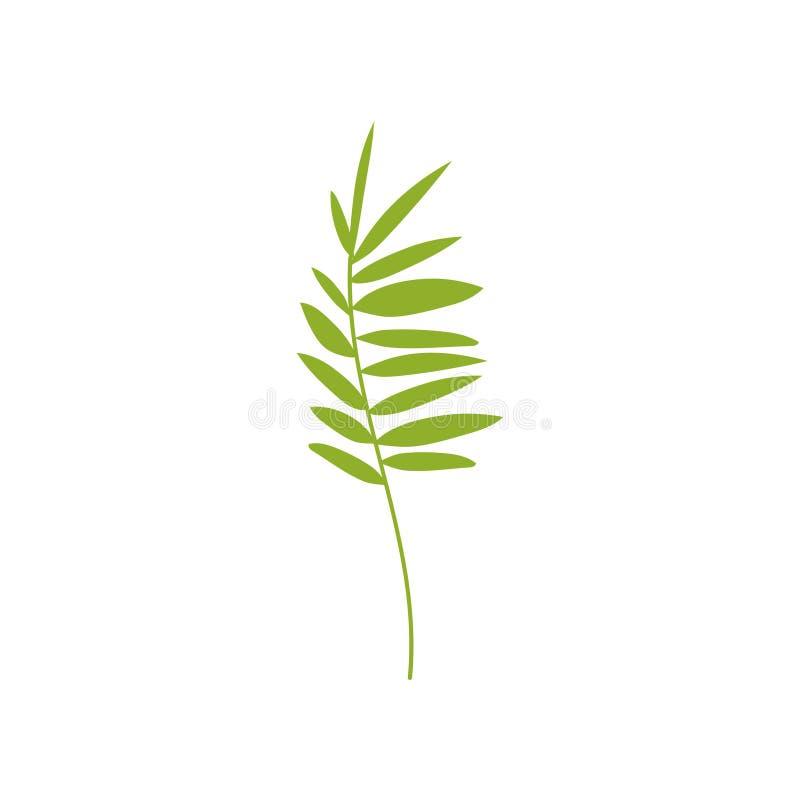 热带羽毛似棕榈叶,植物的设计元素传染媒介例证 皇族释放例证
