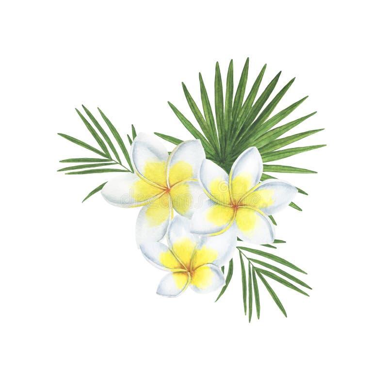 热带花叶子水彩框架例证植物的春天装饰设计贺卡邀请 库存图片