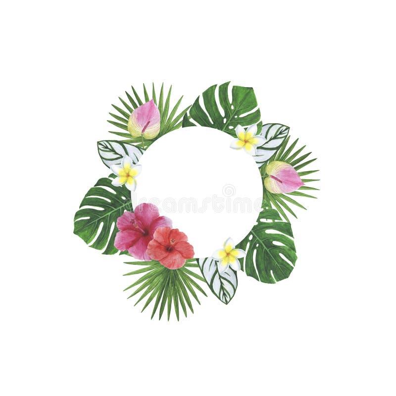 热带花叶子木槿羽毛Monstera棕榈水彩框架例证植物的春天装饰设计问候 免版税图库摄影