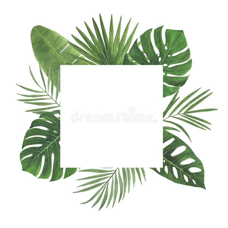 热带花叶子木槿羽毛Monstera棕榈水彩框架例证植物的春天装饰设计问候 图库摄影