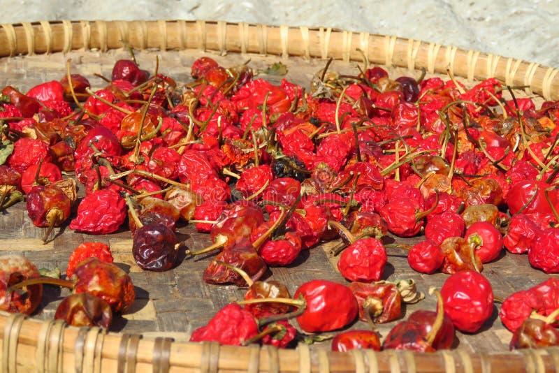 烘干的红辣椒在阳光下,喜马拉雅山山区域,尼泊尔 免版税库存照片
