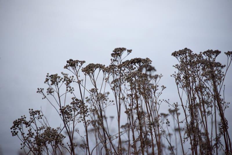 烘干野草在秋天末期 库存照片