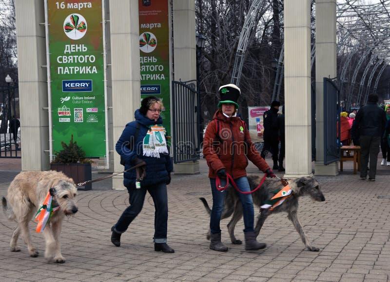 爱尔兰猎犬狗和所有者在圣帕特里克节庆祝在莫斯科 免版税库存图片