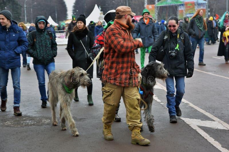 爱尔兰猎犬狗和所有者在圣帕特里克节庆祝在莫斯科 免版税库存照片