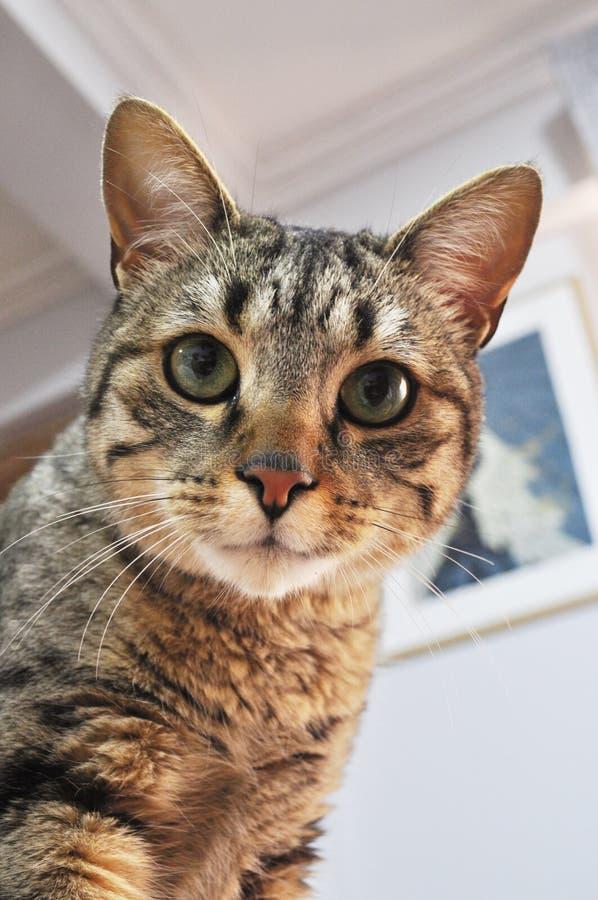 照相机猫查找 图库摄影