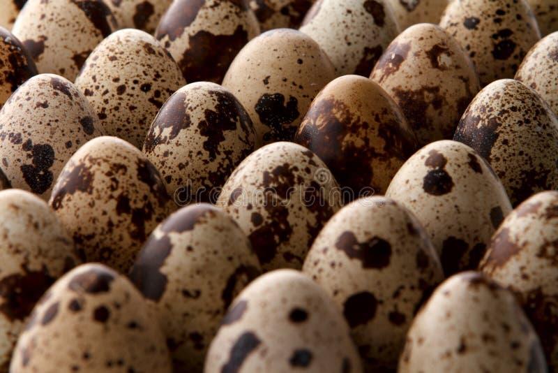 特写镜头一些鹌鹑蛋 免版税库存照片