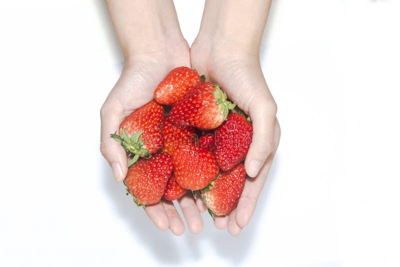 特写镜头拿着在白色背景的妇女手草莓 免版税图库摄影